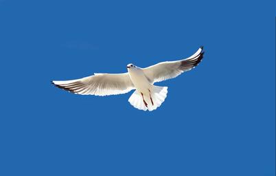 云南蓝色天空主题游小程序