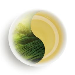 一颗茶小程序